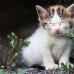 海外旅行で行きたい猫スポット 10選、猫好きで旅行好きの方は必見