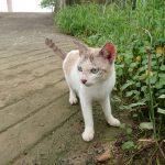 猫の町 マレーシアのクチンを歩く
