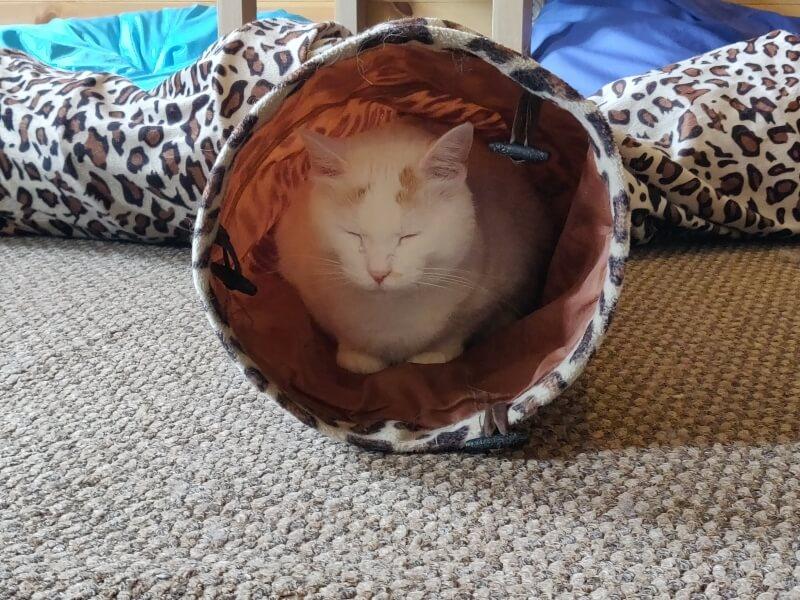 居心地のいいウラジオストクの猫カフェ「ヴァレリヤニチ」